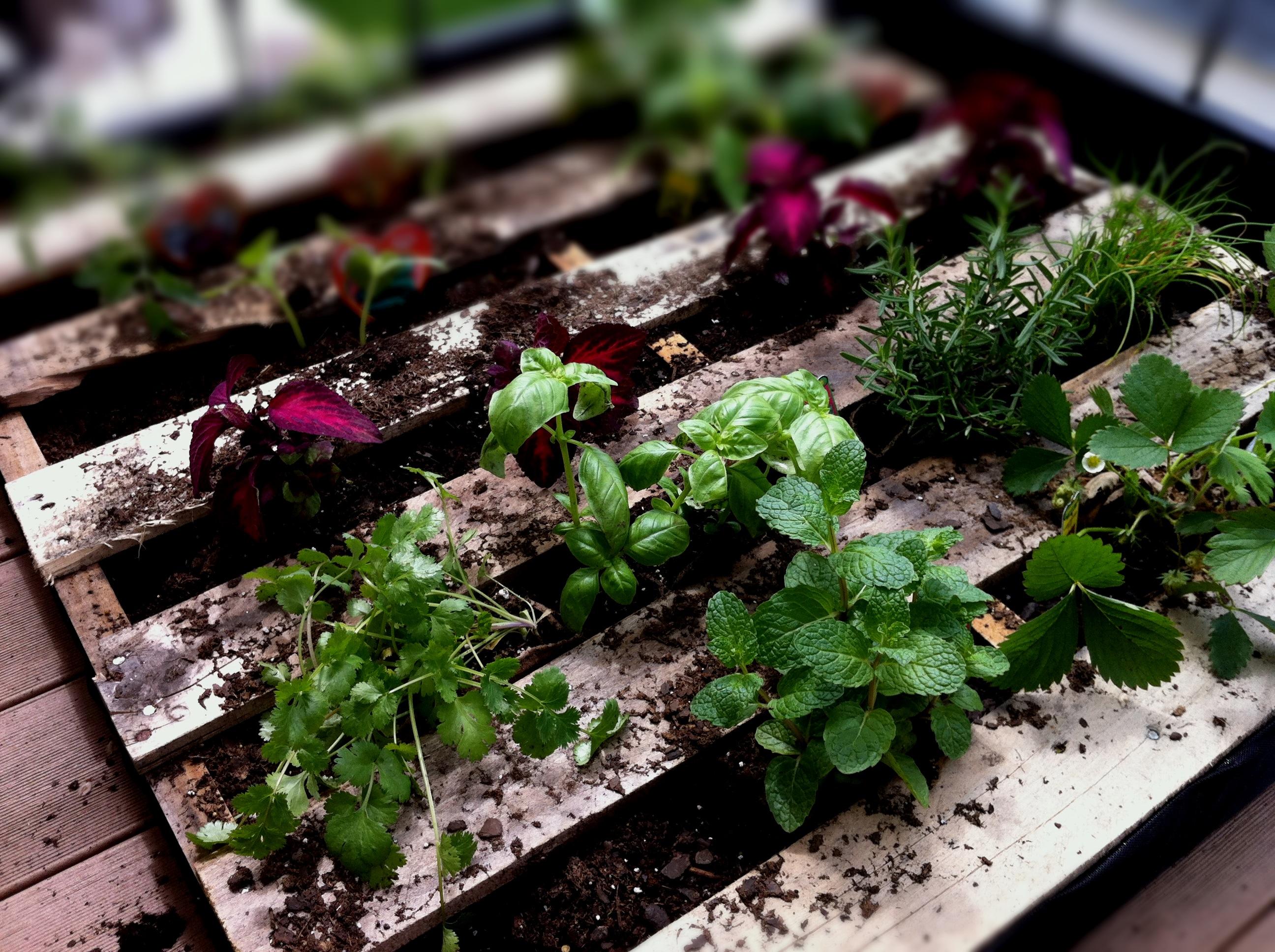 pallet planter natepk