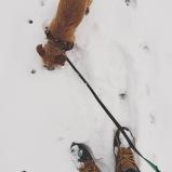Bennington the Rescue Dog, Terrier/Dachshund Mix