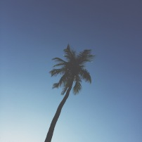 South Beach Palm, Miami