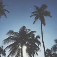 South Beach Palms, Miami