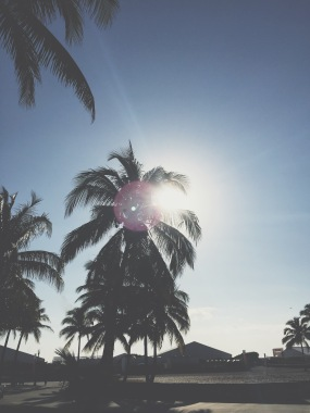 South Beach Palms, Miami with VSCOcam with t1 preset