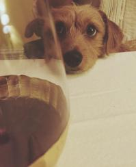 Bennington, the wine connoisseur.